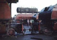 Class 59's